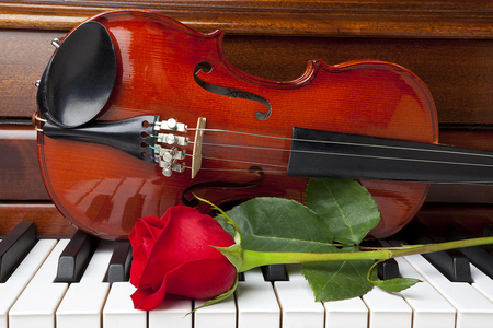 violin, piano and rose